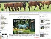 Výstava koní